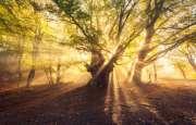 Il bosco e la luce- foto dal web