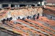Piccioni infreddoliti sul tetto- foto Figline wordpress