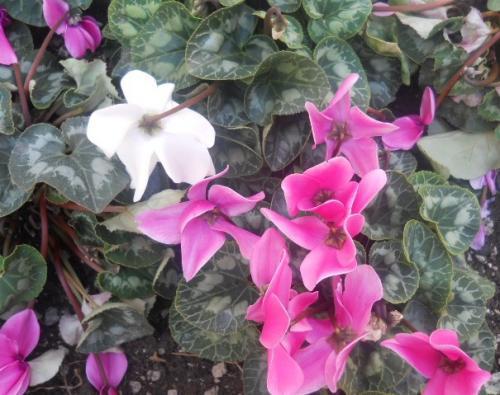 Tra terra e fiori